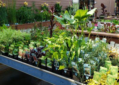 Water gardening 2