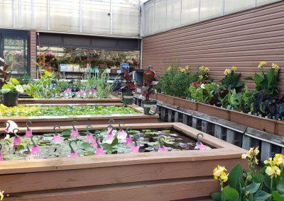 Water gardening 3