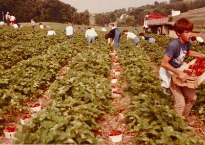 Strawberry Field - Bryan Trax Carrying Flat - 1984
